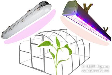 Лампы для растений и фитосветильники для растениеводческих хозяйств от ЦНТ-Групп