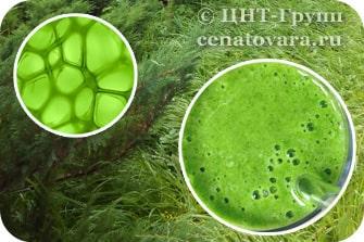 Жидкий хлорофилл - зеленый пигмент хлорофиллин
