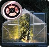 Фитолента для растений светодиодная