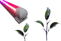Купить фитосветильник